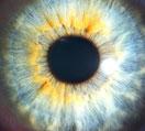 Mikroskopische Vergrösserung von einer Iris