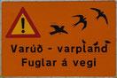 Attention oiseaux en vol