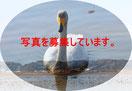 福島県の写真を募集中