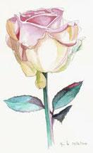 La rose c'est quand même mieux que la couperose !