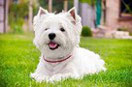 Allergie bei Hunden behandeln