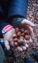 LBV Kindergruppe Donau-Ries spielt Eichhörnchen, versteckt und sucht Nüsse, mit Erfolg