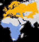 Karte zur Verbreitung der Mehlschwalbe (Delichon urbicum).