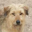 Manoli - Hilfe für Nothunde