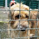 Buelo - Apa Puppy