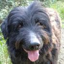 Negrito - Heimatlose Hunde e.V.