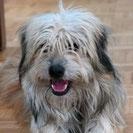 Fussel - Hundehilfe Spanien