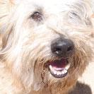 Twix - Denia Dogs e.V.