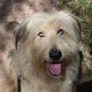 Vanta - Heimatlose Hunde e.V.