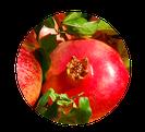 KATAPULT Konzeptideen – die Frucht entwickelt sich.