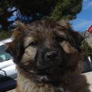 Milagros - Hilfe für Nothunde