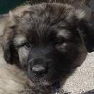 Manolo - Hilfe für Nothunde