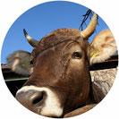 Rettung vor dem Schlachttod und lebenslange Unterbringung in tierleidfreier Landwirtschaft