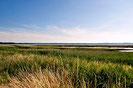 Die Weite der der Landschaft. Blick über Schilf und Gras auf die Geltinger Bucht im Hintergrund