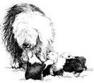 bobtail, oes, Fan Bo, Фан Бо, бобтейл, староанглийская овчарка, Суворова Валерия