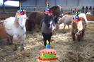 fêter son anniversaire au club