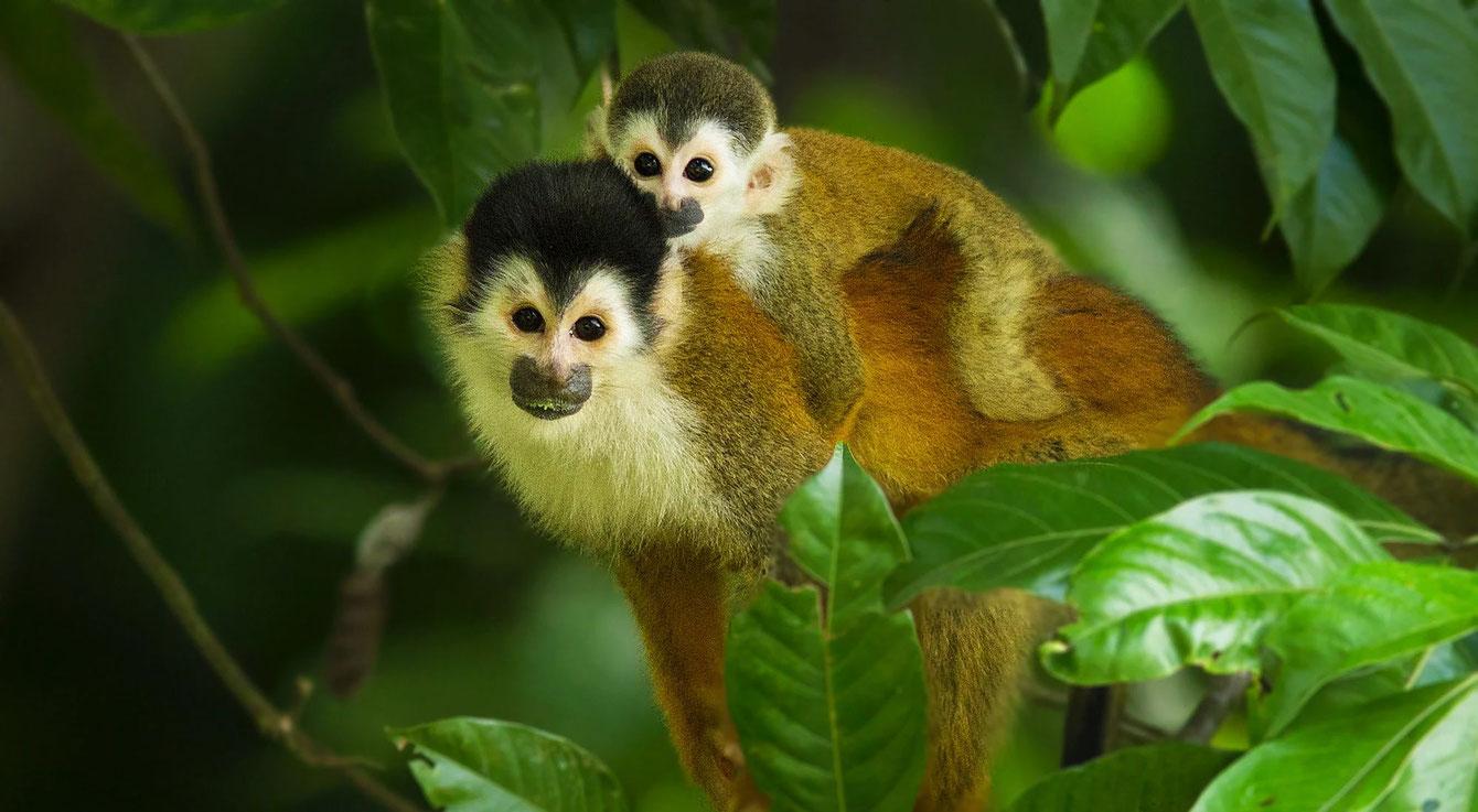 Crea programas de manejo de primates en cautiverio