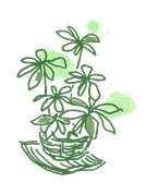 LISUN₋サロンの緑
