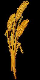 La Pâque juive, La fête des Pains sans levain ou des gâteaux non fermentés, La Fête des Semaines ou Pentecôte ou fête de la Moisson, la fête des Trompettes, Le Jour des Expiations ou jour du grand Pardon ou jour des Propitiations, la fête des Tentes.