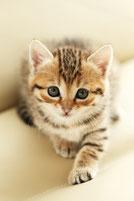 ネコのポーちゃん メス