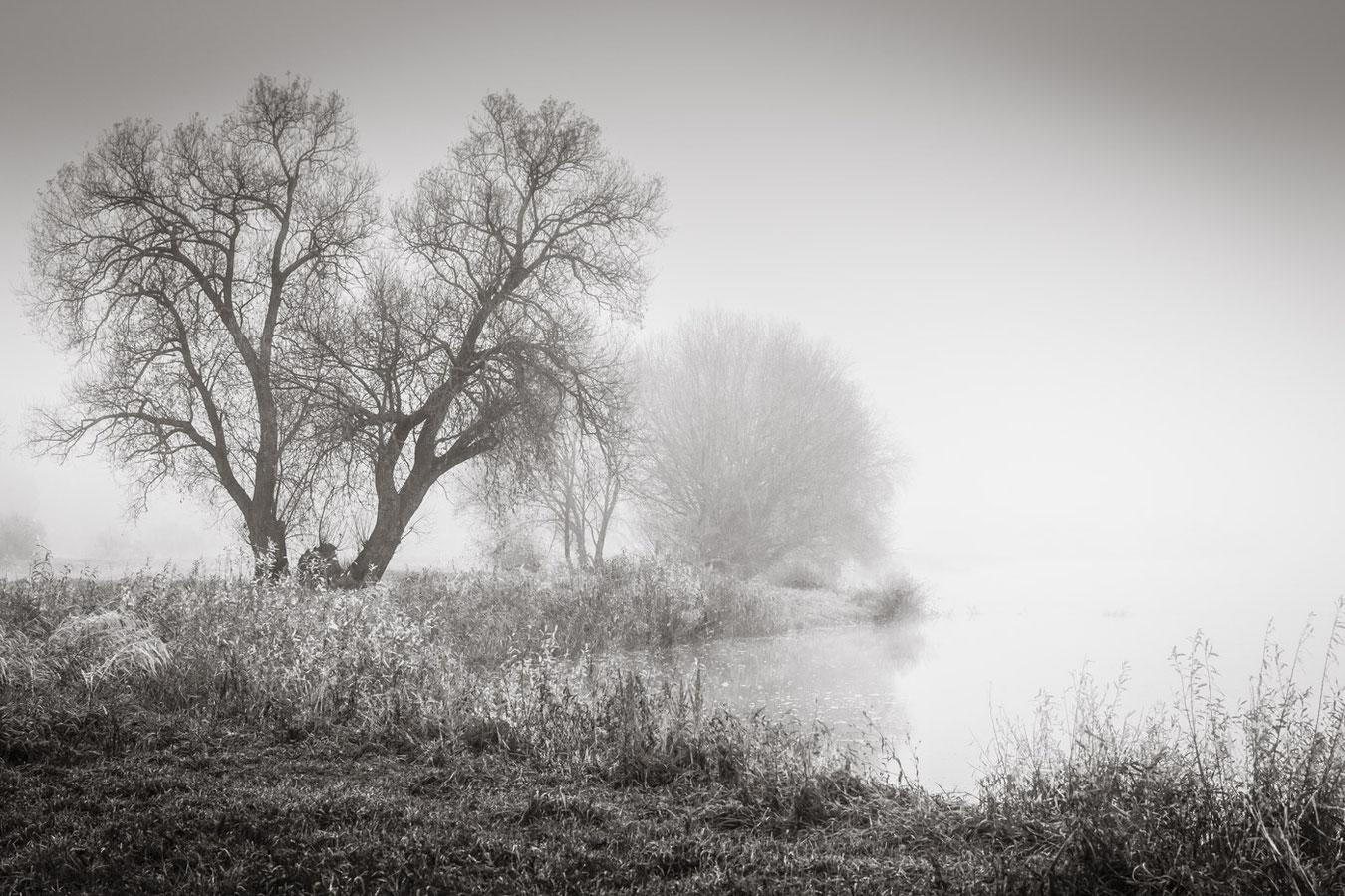 Nebel an der Oder
