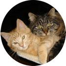 Mit Tieren sprechen - Linkfoto Katzen-Klienten