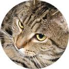 Mit Tieren sprechen - Linkfoto Erfahrungsberichte