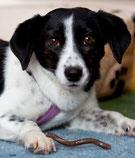 Milka wurde von ihrer Pflegefamilie liebevoll Amy genannt... Milka/Amy wurde entdeckt und konnte somit in ihr Zuhause umziehen. :-)