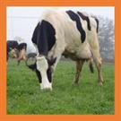 Bovin lait : 27 éleveurs engagés