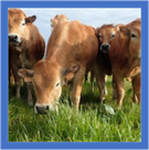 Bovin viande : 15 conseillers