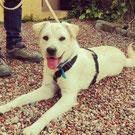 Hundevermittlung eines Hundes aus Spanien