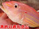 イトヨリダイ 糸縒鯛 寿司