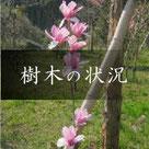 天徳寺樹木葬 樹木の状況