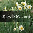 天徳寺樹木葬地の四季