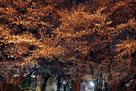 マッハ55さん:埼玉県朝霞市・普通の公園