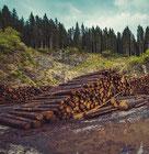 photo activité exploitant forestier