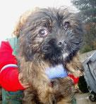 Der aus der Tötungs-station gerettete kleine Hundemann hat sein Zuhause in Kroatien gefunden... :-)