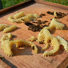 Bio Bienenwachs