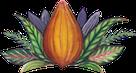 cacao mama cacao pod drawing orange