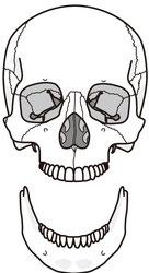 アゴ・顎関節症の原因は頭蓋骨、腕、踵のねじれから全身まで影響する