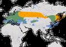 Karte zur Verbreitung des Kernbeißers (Coccothraustes coccothraustes) weltweit