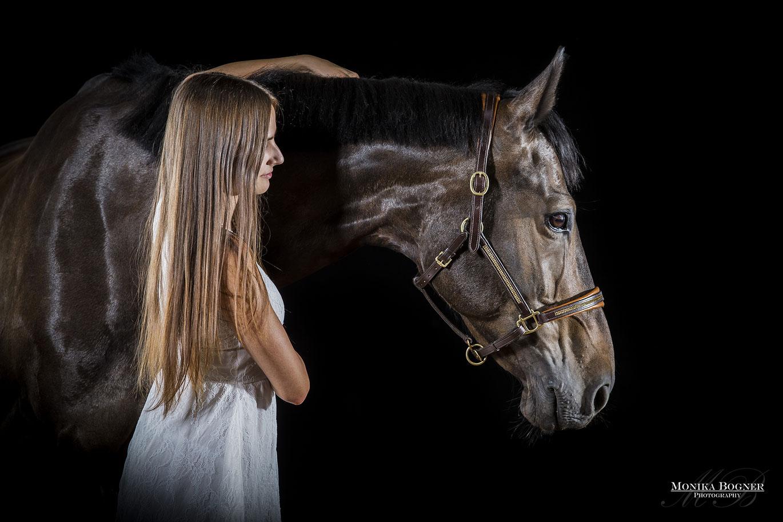 Pferde im Studio