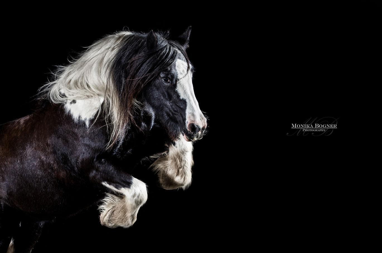 Pferde frei im Studio