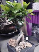Plantes Noix de coco Fleuriste Lambersart