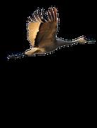 Logo Wendland Kraniche - Christliche Pfadfinder der Adventjugend in Gartow
