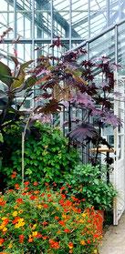 Blühende Pflanzen vor dem Gewächshaus im Botanischen Volkspark Blankenfelde. Foto: Helga Karl
