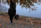 Deux chiens et leurs maîtres se promènent au bord d'une route par coach canin 16 éducateur canin en charente