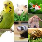 うさぎ、インコ、フェレット、ハムスター、金魚、亀、