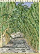 ①21/3小豆島オリーブ園 海辺のオリーブ園は傾斜地で坂のアングルが多かった