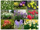 wiosenne kwiaty - gra autorstwa Asi Apanasewicz